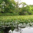 毎日の散歩は大沼湖畔で!